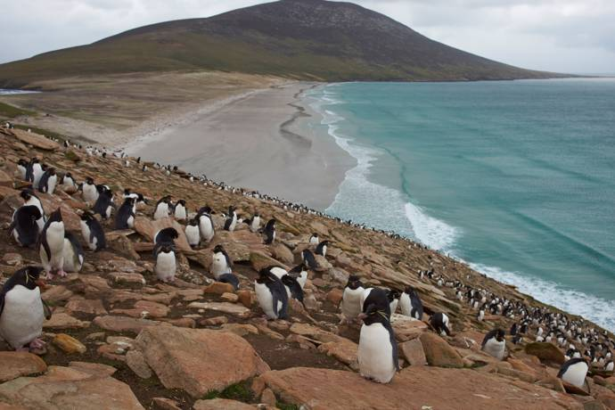 image of penguins on the coast in the falkland islands